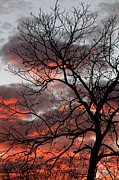 Linda Phelps - Vibrant Sunset with Tree...