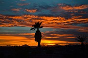 Rincon Road - Vibrant Tucson Sunset