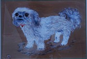 Marie Bulger - Vickie the Shih Tzu