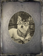 Dressed Photo Framed Prints - Victorian Westie Framed Print by Edward Fielding