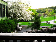 April K Rabino - View from the Lake Porch