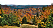 Evergreen Trees Posters - View from the top of McCauley Mountain Poster by David Patterson