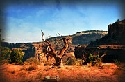 Marty Koch Framed Prints - View Of The Canyon Framed Print by Marty Koch