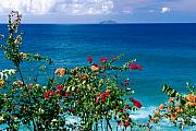 Puerto Rico Photo Prints - View ofDesecheo Island from Rincon Puerto Rico Print by George Oze