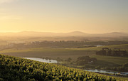 Stellenbosch Photo Posters - View over Vines Poster by Neil Overy