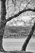 James Bo Insogna - View Through The Trees To Longs Peak BW