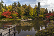 Japanese Maple Posters - View to the Fall Japanese Garden Poster by Mike Reid