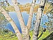 Autumn Photographs Mixed Media Prints - View Trough Aspen Branches Print by Photography Moments - Sandi