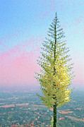 Pastel - View With Blooming Yucca by Ben and Raisa Gertsberg