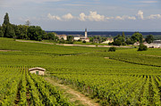 Grape Vine Photos - Village of Aloxe Corton. Cote dOr. Burgundy. France by Bernard Jaubert