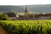 Grape Vineyards Photo Posters - Village of Monthelie. Burgundy. France Poster by Bernard Jaubert