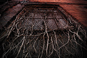 Intertwining Prints - Vine of Decay 1 Print by Amy Cicconi