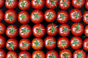 Vine Metal Prints - Vine Tomato Pattern Metal Print by Tim Gainey