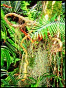 Tree Ferns Digital Art - Vine with Everything by Ellen Cannon