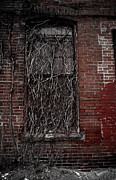 Intertwining Posters - Vines of Decay Poster by Amy Cicconi
