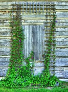 Log Cabins Photo Acrylic Prints - Vines Of Metamora Acrylic Print by Mel Steinhauer