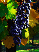 Blue Grapes Photos - Vineyard 28 by Xueling Zou