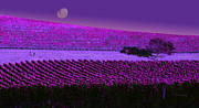 Wine Making Digital Art Prints - Vineyard 40 Print by Xueling Zou