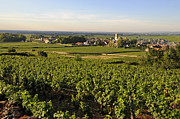 Grape Vines Photos - Vineyard and village of Pommard. Cote dOr. Route des grands crus. Burgundy.France. Europe by Bernard Jaubert