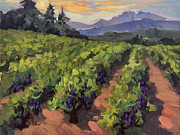 Grapes Painting Posters - Vineyard at Dentelles Poster by Diane McClary