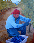 Sauvignon Prints - Vineyard Harvest IV Print by Donna Schaffer