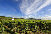 Wine Vineyard Prints - Vineyard hut. vineyard. Cote de Beaune. Burgundy. France. Europe Print by Bernard Jaubert