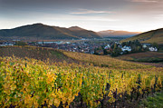 Alsace Framed Prints - Vineyard in Alsace Framed Print by Eric Bauer