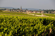 Small Houses Framed Prints - Vineyard in front of the village of Meursault. Burgundy Wine Road. Cote dOr.Burgundy. France. Europ Framed Print by Bernard Jaubert