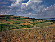 Wine Making Photo Prints - Vineyard in Frushka Gora. Serbia Print by Juan Carlos Ferro Duque