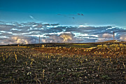 Vineyard In Lava Print by Patricia Hofmeester