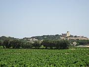 Vineyard In Provence Print by Pema Hou