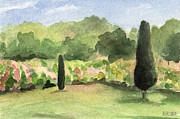 Waiting Room Paintings - Vineyard in Provence Watercolor Paintings of France by Beverly Brown Prints