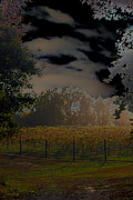 Carolyn Stagger Cokley - vineyard in the afternoon2