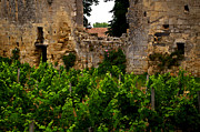 Vin Posters - Vineyard In The Ruins Poster by Christine Burdine