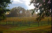 Carolyn Stagger Cokley - vineyard landscape
