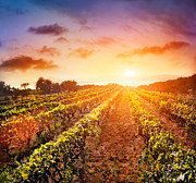 Wine Vineyard Photos - Vineyard by Mythja  Photography