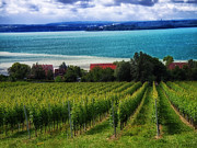 Wine Making Posters - Vineyard Overlooking Lake Constance in Switzerland Poster by Mountain Dreams