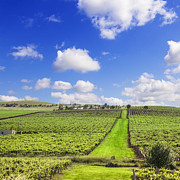 Vineyard Landscape Prints - Vineyard South Australia Square Print by Colin and Linda McKie