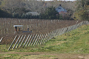 Bob Savage - Vineyard Southold New...