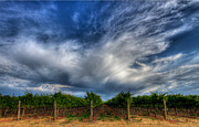 Vineyard Landscape Framed Prints - Vineyard Storm Framed Print by Beth Sargent