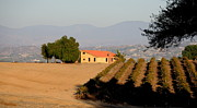 Wine Vineyard Photo Originals - Vineyard Villa by Jan Massie