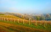 Ann Johndro-Collins - Vineyard Way Croatia