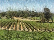 Viticulture Digital Art Framed Prints - Vineyard With Oak Framed Print by Bud Anderson