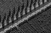 Vineyards From Hot Air Balloon Print by Bob Phillips