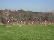 Glasses Photo Metal Prints - Vineyards in VA - 121228 Metal Print by DC Photographer
