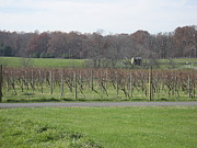 Vineyards In Va - 121234 Print by DC Photographer