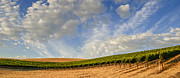 Vinery Photos - Vineyards by Radek Hofman