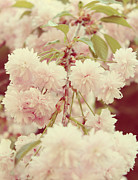 Pink Floral Art Photos - Vintage 3 by Kristin Kreet