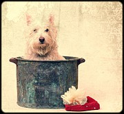 Westie Dog Framed Prints - Vintage Bathtime Framed Print by Edward Fielding