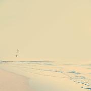 Tim Hester - Vintage Beach Birds